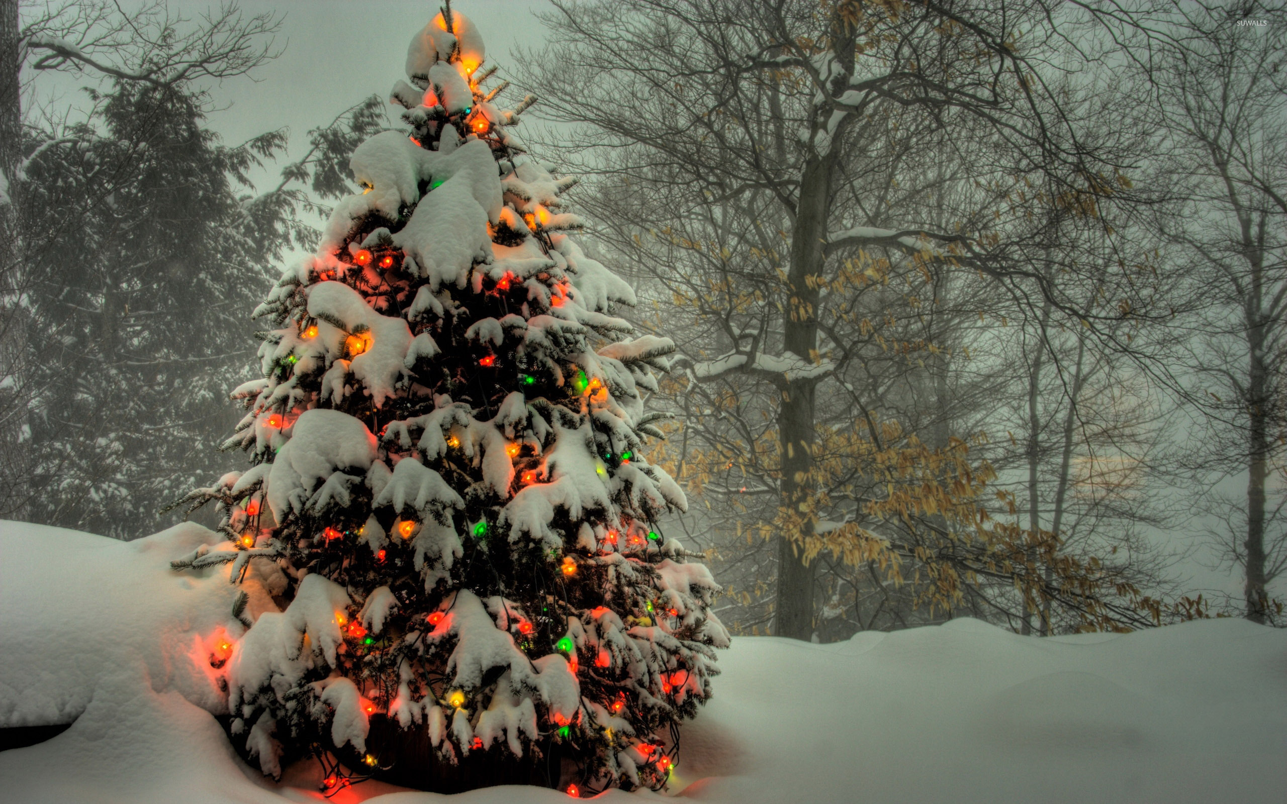 christmas tree shining in the snowy forest wallpaper - holiday