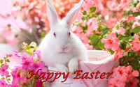 Easter bunny [3] wallpaper 2560x1600 jpg