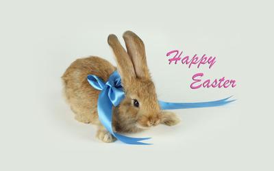Easter bunny [5] wallpaper