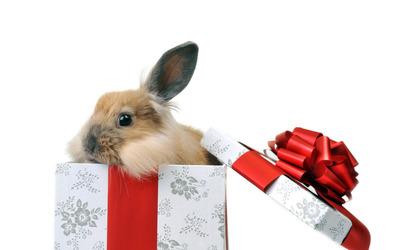 Easter bunny [2] wallpaper