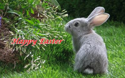 Easter bunny [7] wallpaper