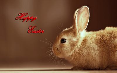 Easter bunny [8] wallpaper