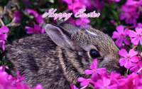 Easter bunny [6] wallpaper 1920x1200 jpg