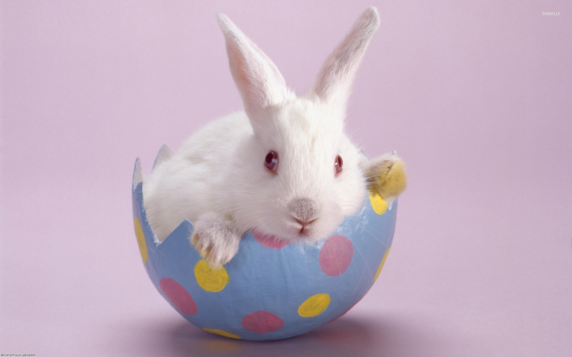 Easter Bunny wallpaper - Holiday wallpapers - #2738 for Real Easter Bunny With Eggs  155fiz