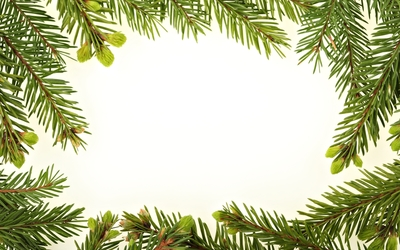 Fir branches wallpaper