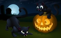 Jack-o'-lantern and kittens wallpaper 2560x1440 jpg