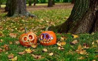 Pumpkins in the grass wallpaper 2560x1600 jpg