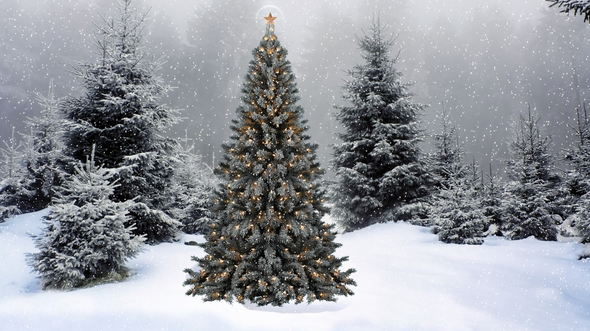 Snow falling on the Christmas tree wallpaper - Holiday wallpapers ...