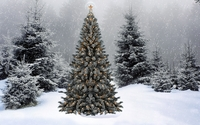 Snow falling on the Christmas tree wallpaper 1920x1080 jpg