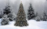 Snow falling on the Christmas tree wallpaper 1920x1080 jpg