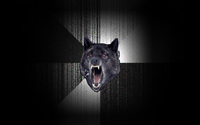 Insanity Wolf wallpaper 1920x1200 jpg