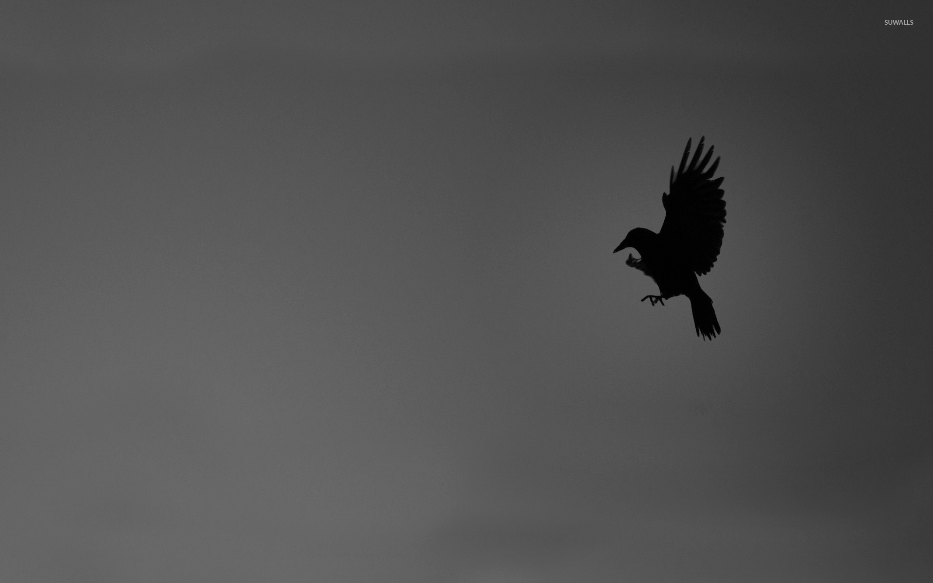 Most Inspiring Wallpaper Bird Minimalist - bird-14934-1920x1200  Pic_92806.jpg