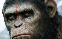 Dawn of the Planet of the Apes wallpaper 1920x1080 jpg