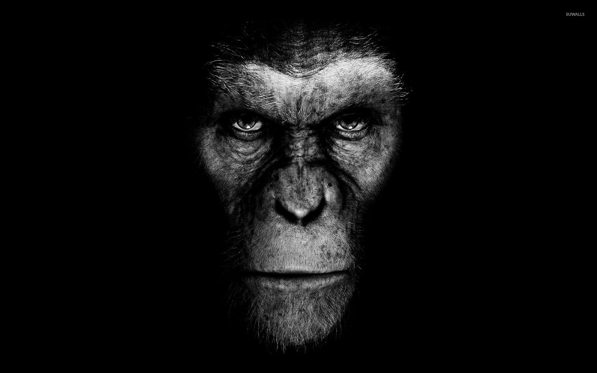 Rise Of The Planet Of The Apes Wallpaper Movie Wallpapers 29033