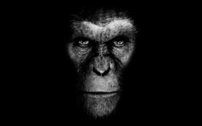 Rise of the Planet of the Apes wallpaper
