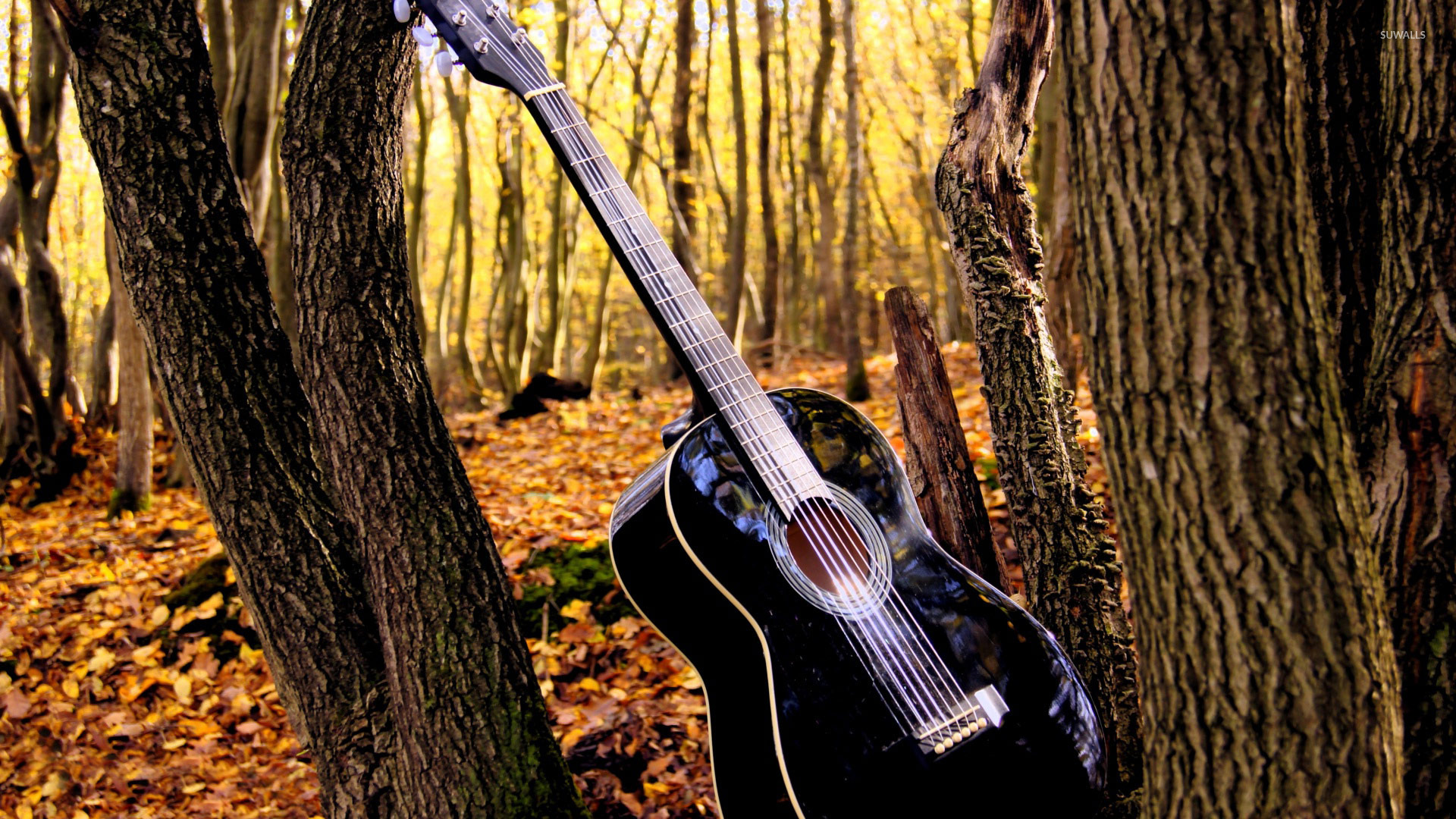 Great Wallpaper Music Guitar - guitar-in-the-forest-19122-1920x1080  Gallery_639474.jpg