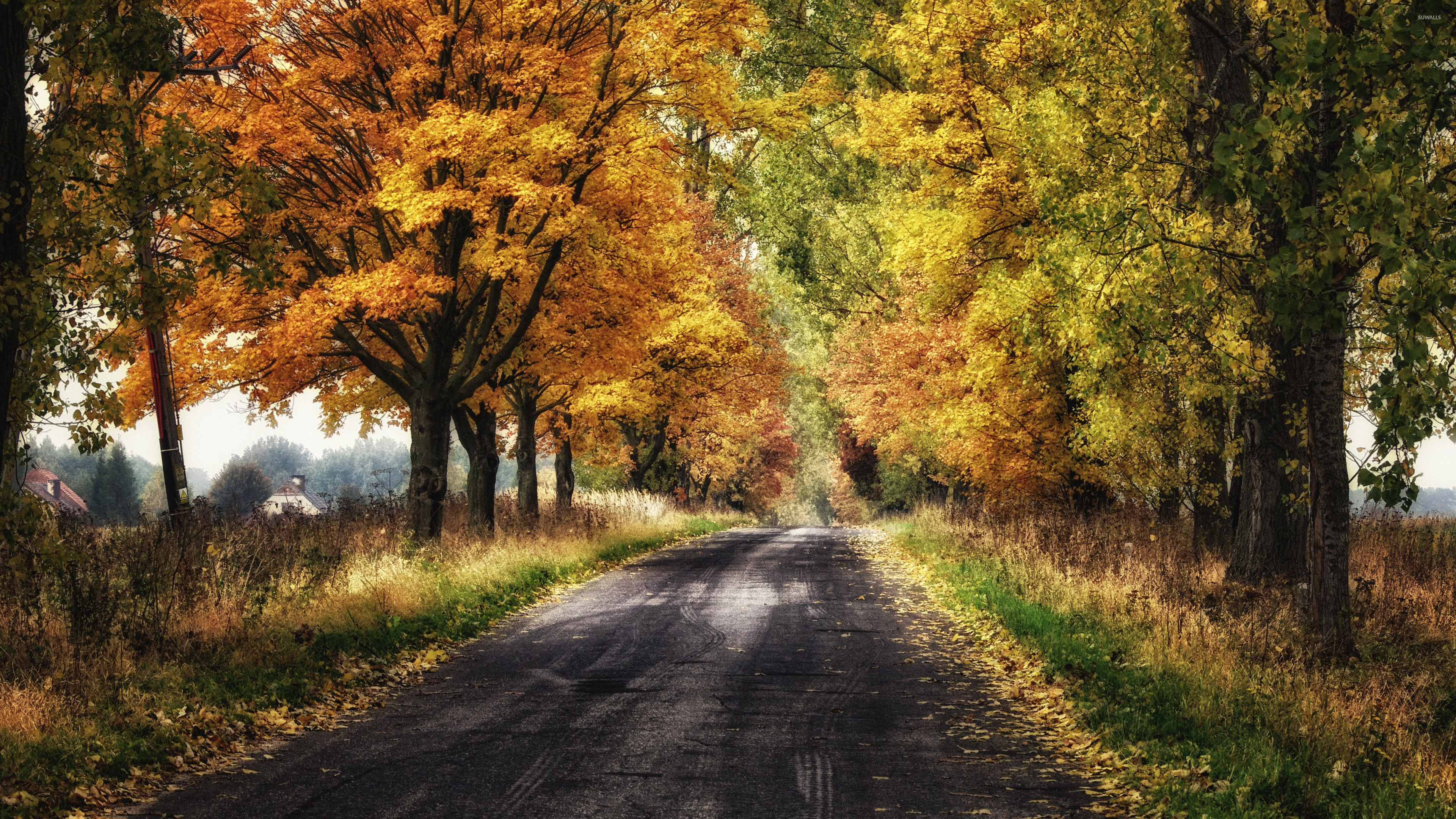 Amazing Autumn Forest Wallpaper Nature Wallpapers 39577