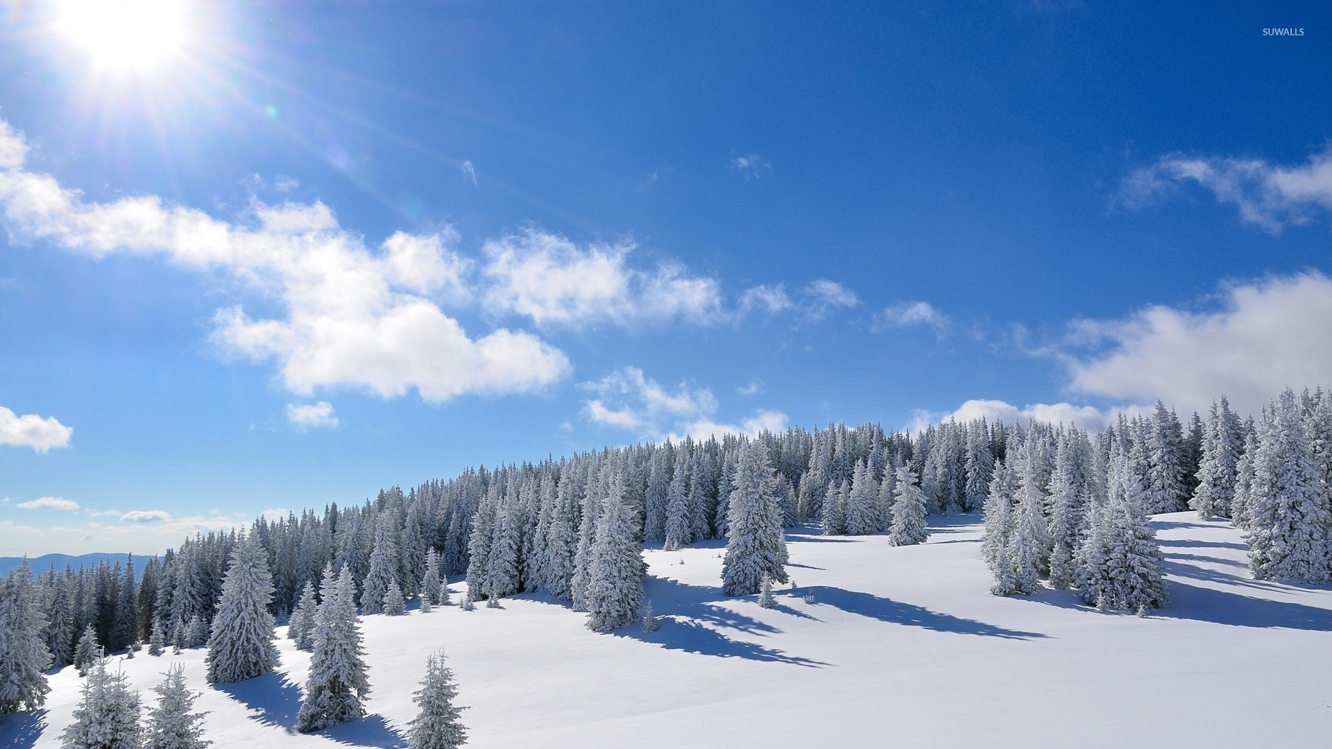 Amazing Bright Sun Over The Snowy Forest Wallpaper Nature