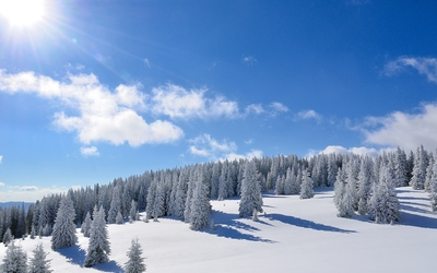 Amazing bright sun over the snowy forest wallpaper