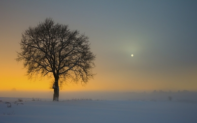 Amazing golden sunset behind the lonesome tree wallpaper