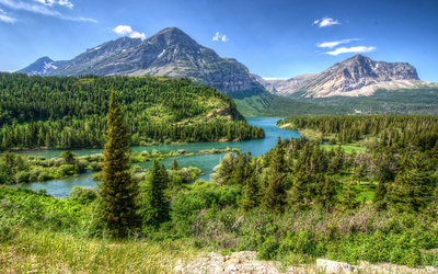 Amazing green forest in Glacier National Park wallpaper