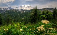Amazing green nature by the snowy mountain peak wallpaper 2880x1800 jpg