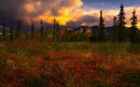 Amazing nature on the filed by the hills at sunset wallpaper 2560x1600 jpg