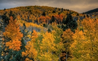 Amazing shades of autumn in the mountain forest wallpaper 2560x1600 jpg