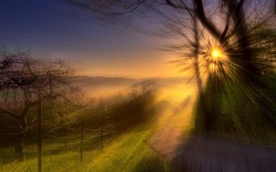 Amazing sunlight through trees wallpaper