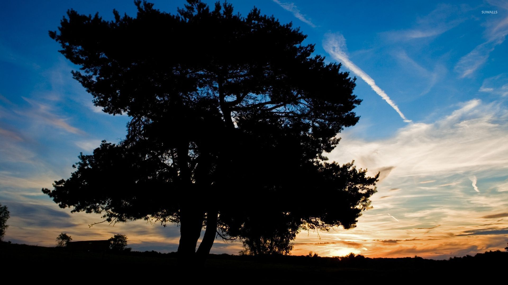 Amazing Sunset Sky Behind The Big Tree Wallpaper Nature