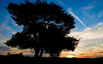 Amazing sunset sky behind the big tree wallpaper