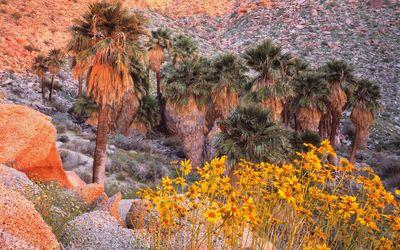 Anza-Borrego Desert State Park Wallpaper