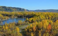 Autumn birch forest wallpaper 1920x1200 jpg
