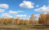 Autumn birch trees wallpaper 3840x2160 jpg