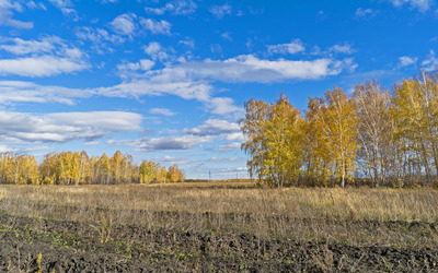 Autumn birch trees on a sunny day wallpaper