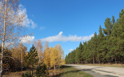 Autumn birch trees on the road side wallpaper