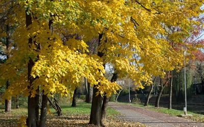 Autumn colors in the park wallpaper