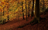 Autumn forest [3] wallpaper 2560x1600 jpg