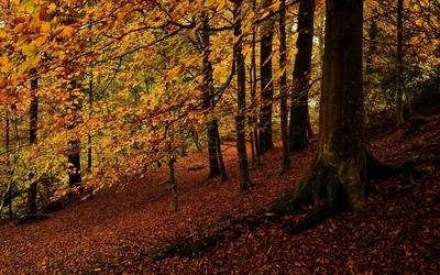 Autumn forest [3] wallpaper