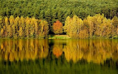 Autumn forest by the lake wallpaper