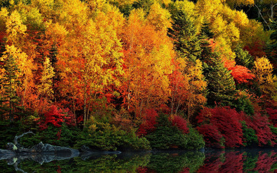 Autumn forest by the lake [3] Wallpaper