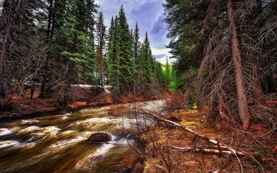 Autumn forest by the whirling river Wallpaper
