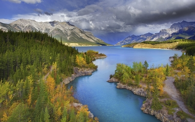 Autumn forest on the Abraham Lake side wallpaper