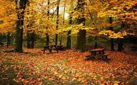 Autumn  in the forest wallpaper 1920x1080 jpg