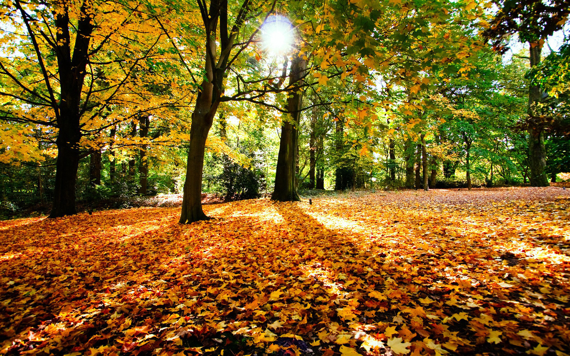 Autumn in the forest wallpaper - Nature wallpapers - #15554