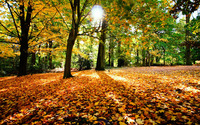 Autumn in the forest wallpaper 1920x1200 jpg