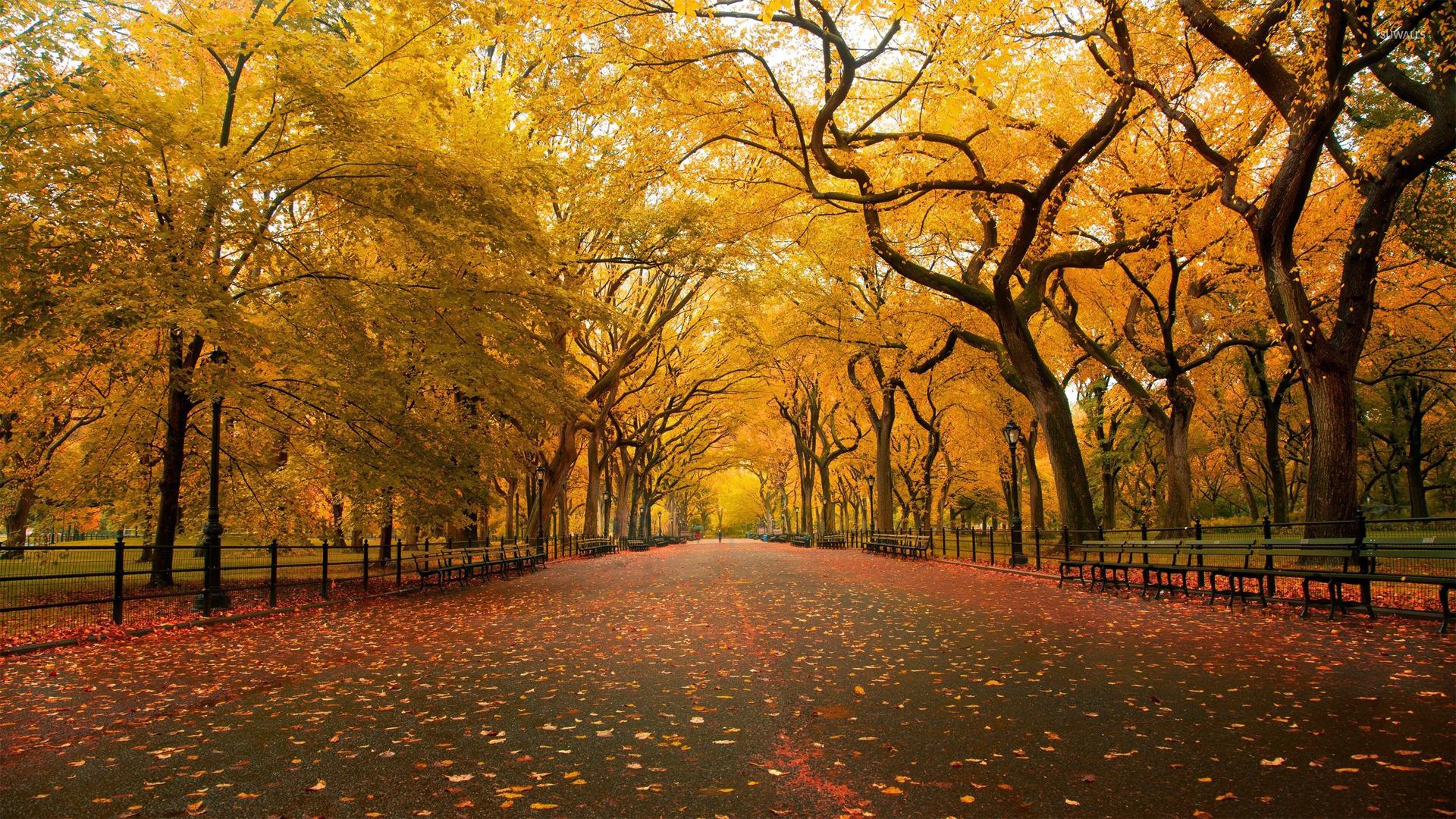 autumn park wallpaper 1920x1080 - photo #8