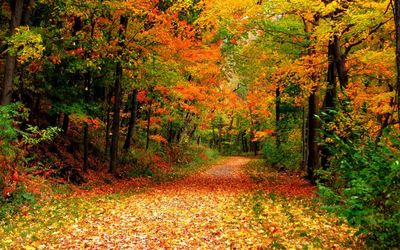 Autumn lane through the forest wallpaper