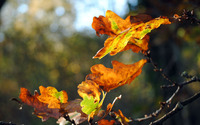 Autumn leaves [14] wallpaper 1920x1080 jpg