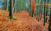 Autumn leaves in mossy forest wallpaper 1920x1080 jpg